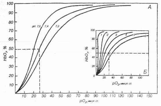 Рецепторы легких которые участвуют в формировании рефлекса геринга-брейра